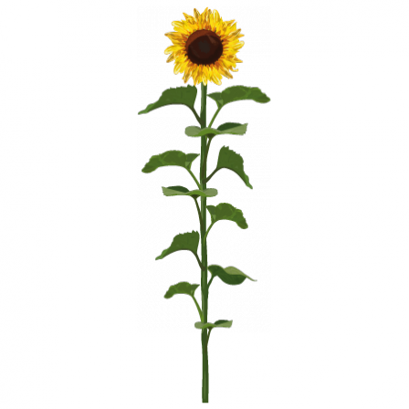Stickers Tournesol