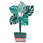 Stickers Plantes - Monstera - Corail